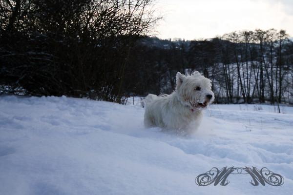 Speedy genießt den Schnee im Februar