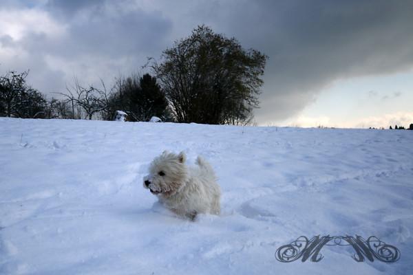 Speedy jagd durch den Schnee