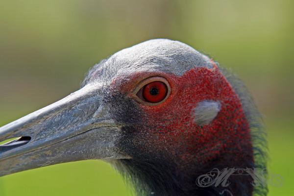 Vogel im Opel-Zoo (März 2014)
